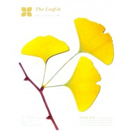 Leaf-it ginkgo